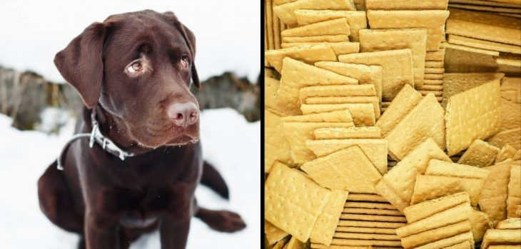 Can Dogs Have Graham Crackers Of Any Kind
